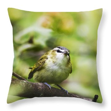 Curious Vireo Throw Pillow by Christina Rollo