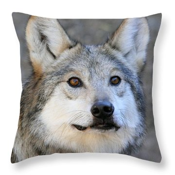 Curious Wolf Throw Pillow