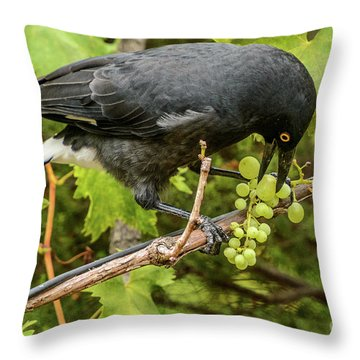 Throw Pillow featuring the photograph  Currawong On A Vine by Werner Padarin