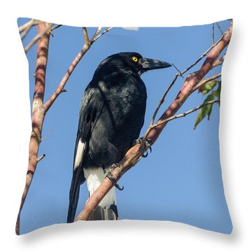 Currawong Throw Pillow