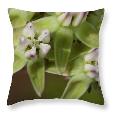 Curtiss' Milkweed #4 Throw Pillow