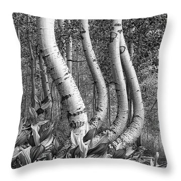 Curved Aspens Throw Pillow