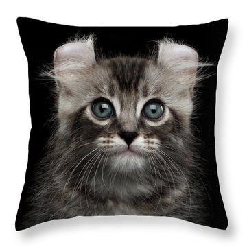 Cute American Curl Kitten With Twisted Ears Isolated Black Background Throw Pillow