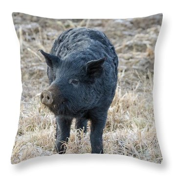 Throw Pillow featuring the photograph Cute Black Pig by James BO Insogna