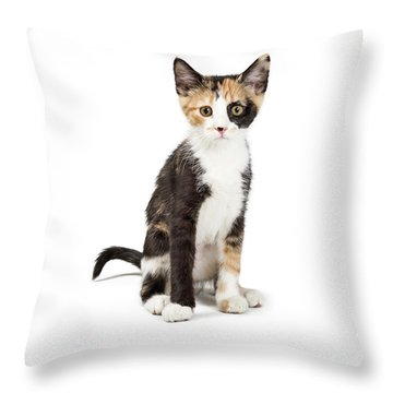 Cute Calico Kitten Sitting Looking Forward Isolated Throw Pillow