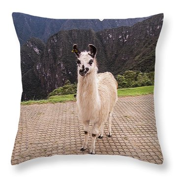 Cute Llama Posing For Picture Throw Pillow