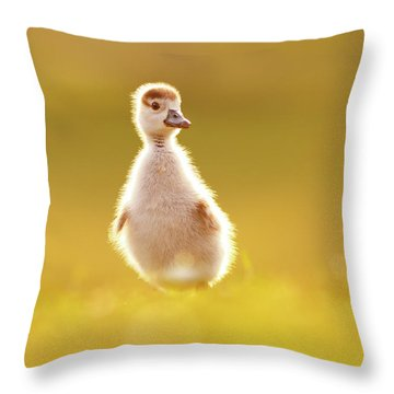 Cute Overload - Baby Gosling Throw Pillow