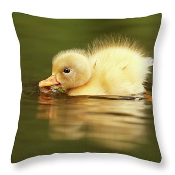Cute Overload Series - The Very Hungry Duckling Throw Pillow