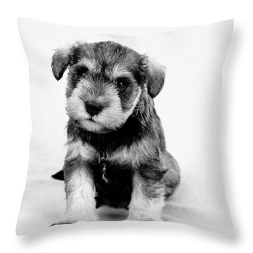 Throw Pillow featuring the photograph Cute Puppy 1 by Serene Maisey