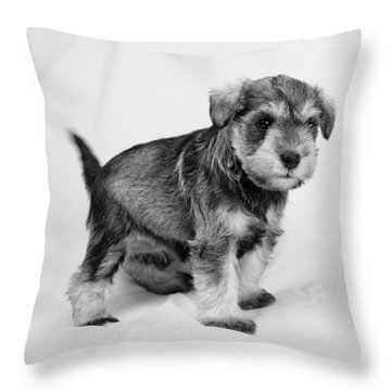 Cute Puppy 2 Throw Pillow by Serene Maisey