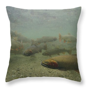 Cutthroat Trout Swim Throw Pillow by Michael S. Quinton