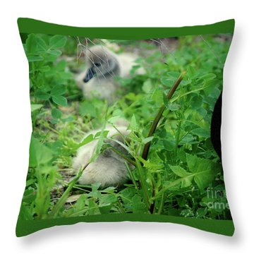 Cygnets V Throw Pillow