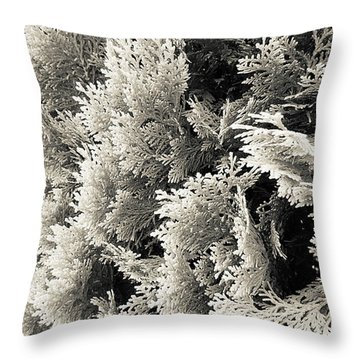 Cypress Branches No.2 Throw Pillow