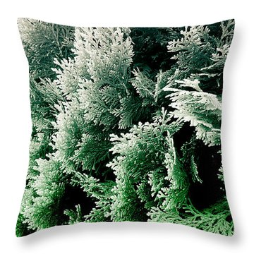 Cypress Branches No.5 Throw Pillow