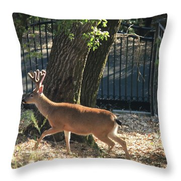 Throw Pillow featuring the photograph D8b6336 8 Point Buck At Our Home Ca by Ed Cooper Photography