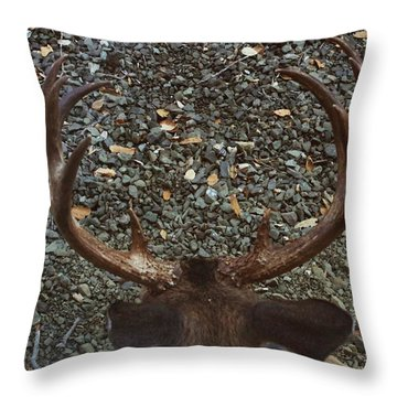 Throw Pillow featuring the photograph D8b6352 8 Point Buck Sonoma Ca by Ed Cooper Photography