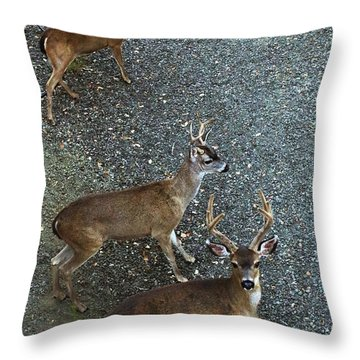 Throw Pillow featuring the photograph D8b6353 3 Mule Deer Bucks Ca by Ed Cooper Photography