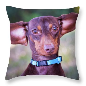 Dachshund Ears Up Throw Pillow by Stephanie Hayes