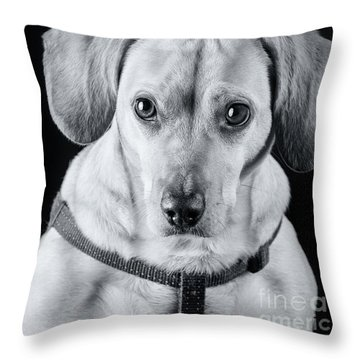 Dachshund Lab Mix Throw Pillow by Stephanie Hayes