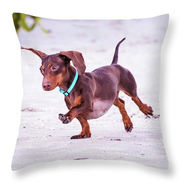 Dachshund On Beach Throw Pillow by Stephanie Hayes