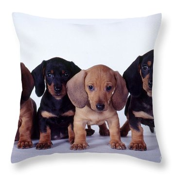 Dachshund Puppies  Throw Pillow