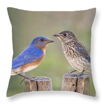 Daddy Bluebird And Juvenile Throw Pillow by Bonnie Barry