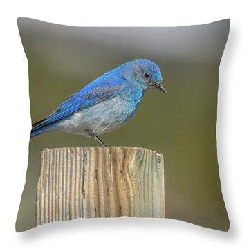 Daddy Bluebird Guarding Nest Throw Pillow