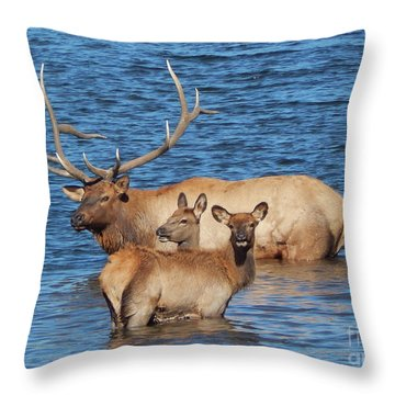 Daddy Daycare Throw Pillow