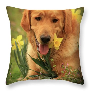 Daffodil Dreams Throw Pillow