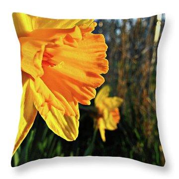 Daffodil Evening Throw Pillow