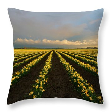 Throw Pillow featuring the photograph Daffodil Storm by Mike Dawson