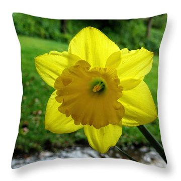 Daffodile In The Rain Throw Pillow
