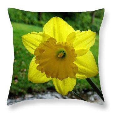 Daffodile In The Rain Throw Pillow