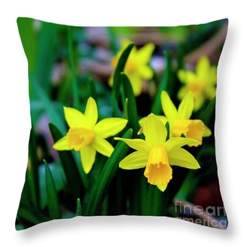 Daffodils A Symbol Of Spring Throw Pillow
