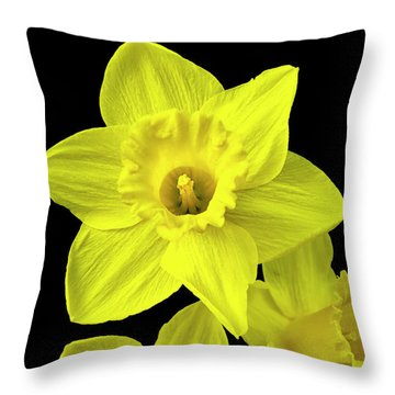 Daffodils Throw Pillow by Christina Rollo