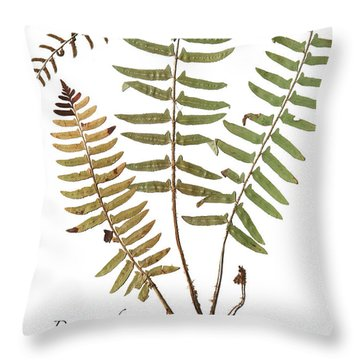 Dagger Fern Throw Pillow