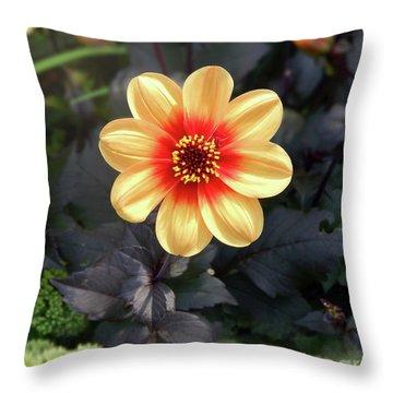 Dahlias Flower - Good Morning Sunshine Throw Pillow