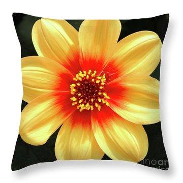 Dahilias Flower Up Close Throw Pillow