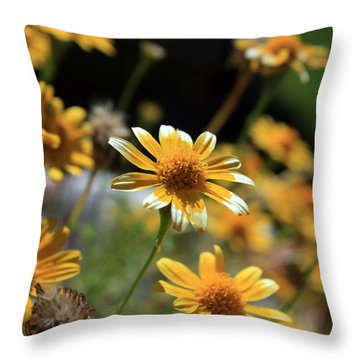 Dahlberg Daisy Throw Pillow