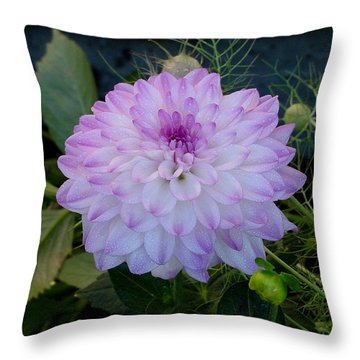 Dahlia Beautiful Throw Pillow by Shirley Heyn