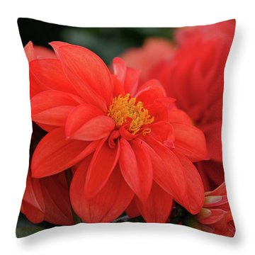 Dahlia Bloomer Throw Pillow