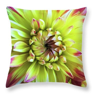 Dahlia Close-up Throw Pillow