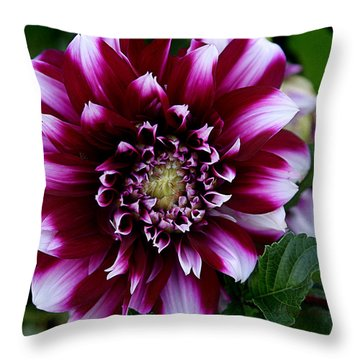 Dahlia Throw Pillow by Denise Romano