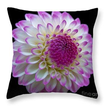 Dahlia Fine Art On Black Throw Pillow
