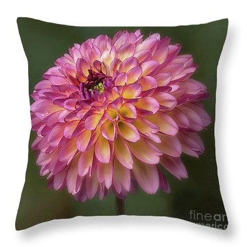 Throw Pillow featuring the photograph Dahlia 'foxy Lady' by Ann Jacobson
