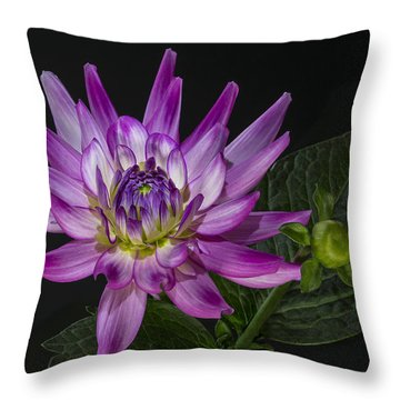 Dahlia Glow Throw Pillow by Roman Kurywczak