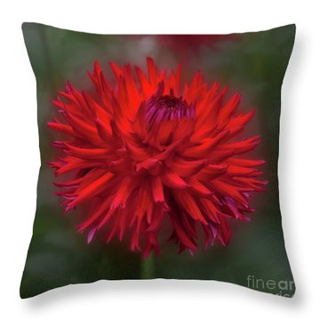 Dahlia 'hollyhill Miss Scarlet' Throw Pillow