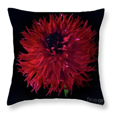 Dahlia 'holyhill Miss Scarlet' Throw Pillow