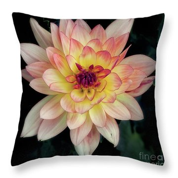 Dahlia 'keith H.' Redux Throw Pillow