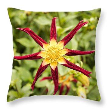 Throw Pillow featuring the photograph Dahlia Star by Brian Eberly